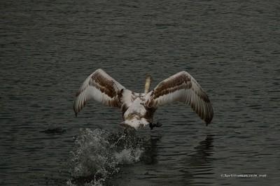 wings :)