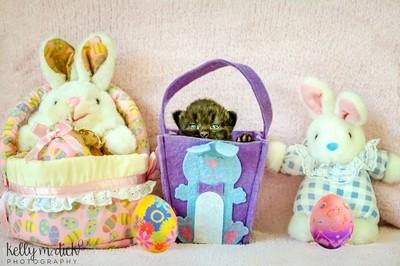 ~Easter Kitten~