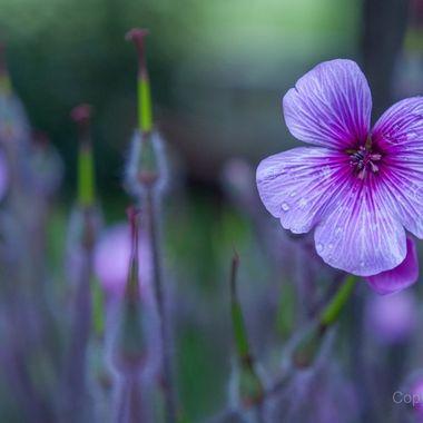 Little flower: big punch.