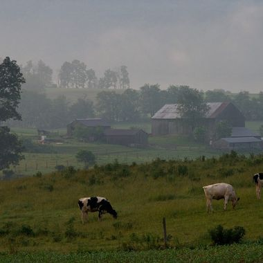An Amish farm soon after sunrise on a foggy morning. The Amish in central Pennsylvania raise dairy cows, corn and hay using horse-drawn equipment. They do not use tractors, central plumbing, central heating or similar modern technology.