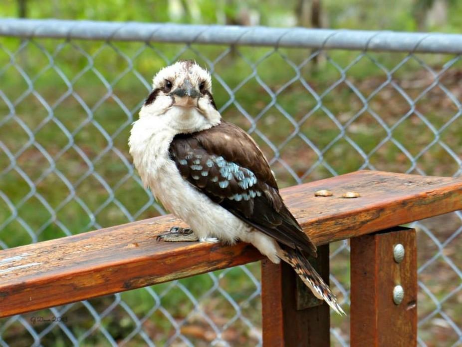 Taken at Straddie Island, Australia