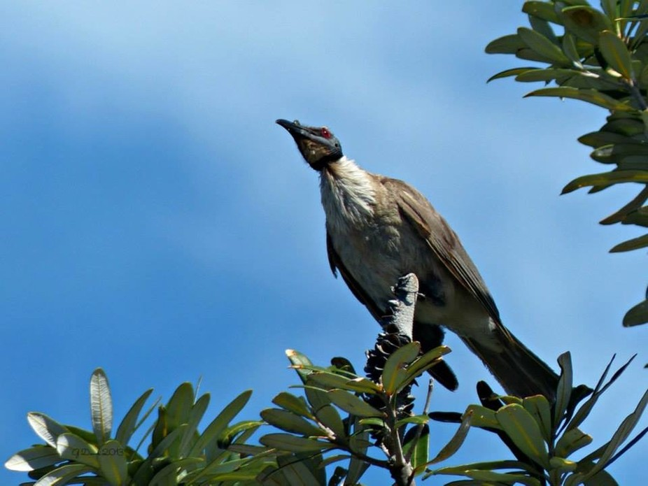 Taken at Stradbroke Island, Queensland