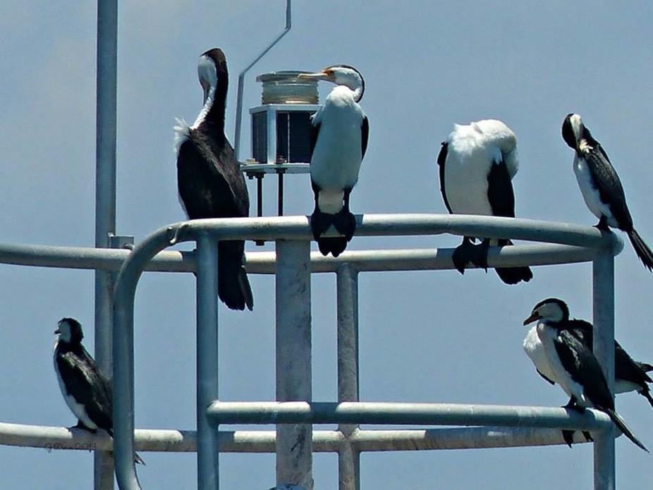 Taken on the way back from Stradbroke Island, Queensland