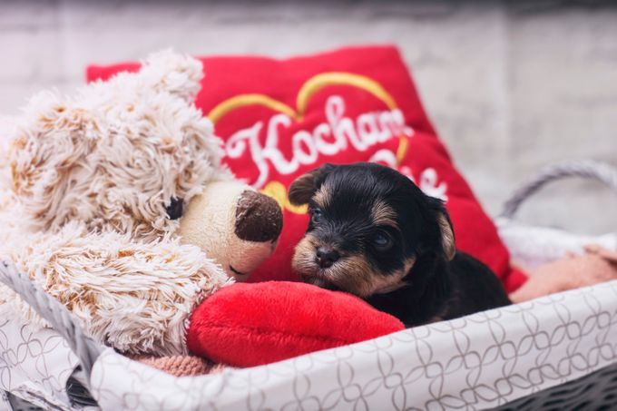 Much_love_1 by mateuszlipski - Kittens vs Puppies Photo Contest