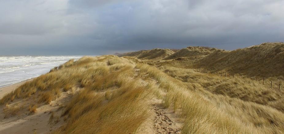 Dunes in De Haan, March 2016