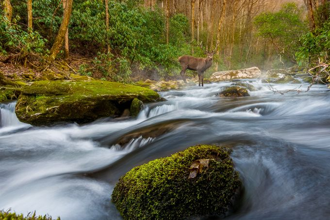 Elk In Stream by sjholbert - Layered Compositions Photo Contest
