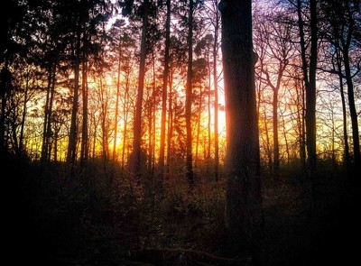 Sunset in th woods