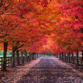 This row of ornamental trees lines the gated entryway of an estate home near Ernie's Grove, Washington. Although the home is not visible fro...