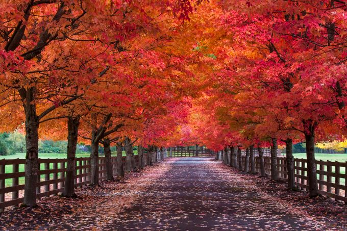Autumn Glory 2 by coastalcutt - Fall 2016 Photo Contest