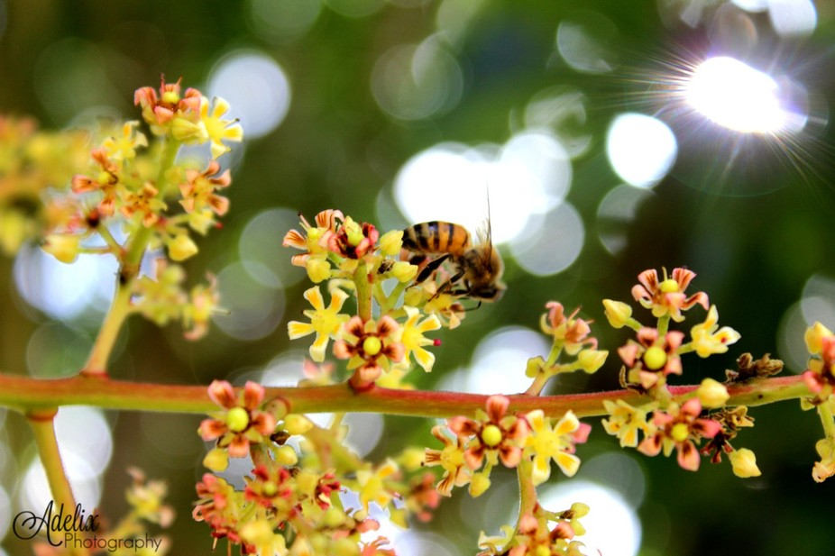 The beauty of pollination
