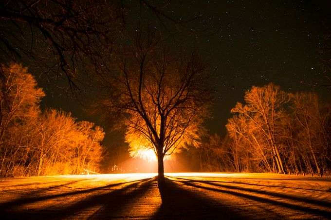 Starry Night by jaminschmitt - Silhouettes Of Trees Photo Contest