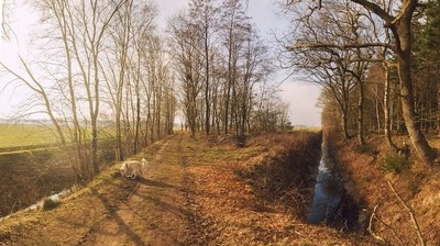 Forest Panorama