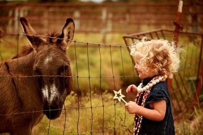 Hey Mr. Mule, can we be friends