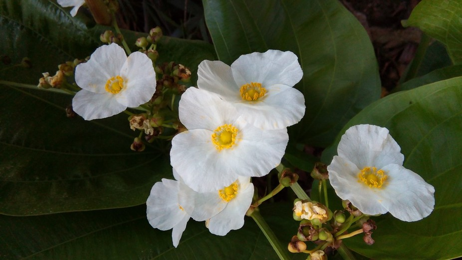 I was walking around the little forest in the city and interested in these cute little white flow...