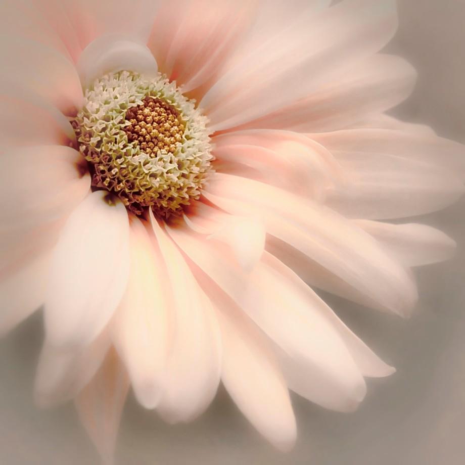Arabesque by DarleneKwiatkowski - Pink Photo Contest