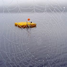 View of a floating dock through a jeweled spider web on Lake St. Charles in Maine.