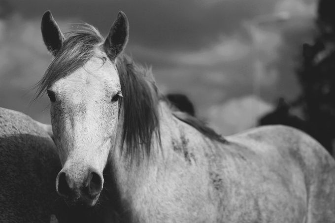 White by LaYue - Animals In Black And White Photo Contest