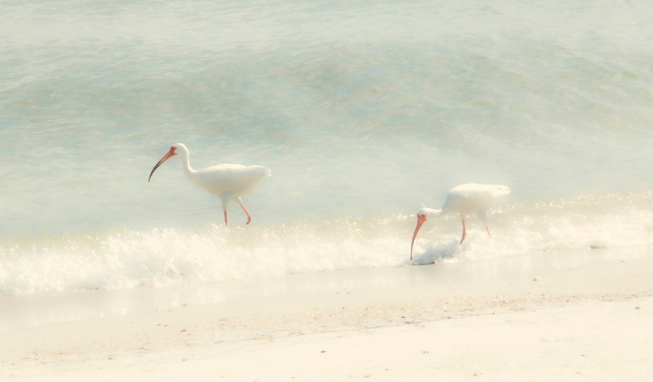 two white cranes softy