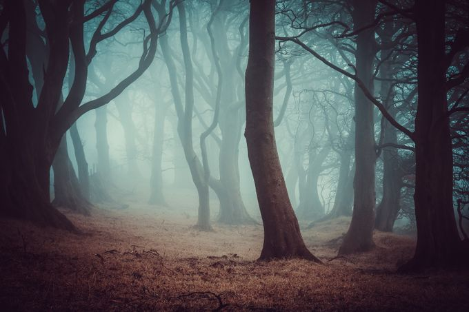 Magic woods by valdi - Mysterious Shots Photo Contest