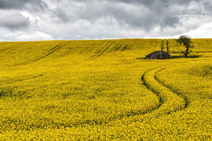 Field of dreams by canonguy1986 - Rule Of Thirds In Nature Photo Contest