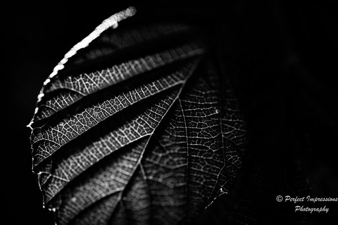 Veins by SaltyGirl - Close Up Art Photo Contest