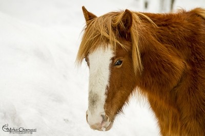 Horse In The Cold Winter