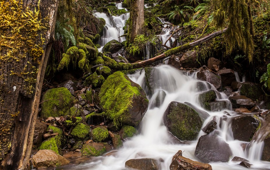 The Umpqua National Forest in Oregon is filled with water gushing, water falls and the Umpqua Riv...
