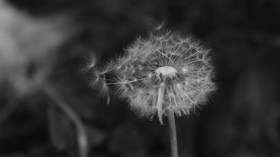 Summer Swept away on a Breeze - Close Up
