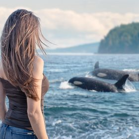 When I travelled along the 101 road in California, we saw some whales from the Cliffs... The scene happened way too far for my lense at the time,...