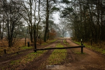Foggy Dirt Road