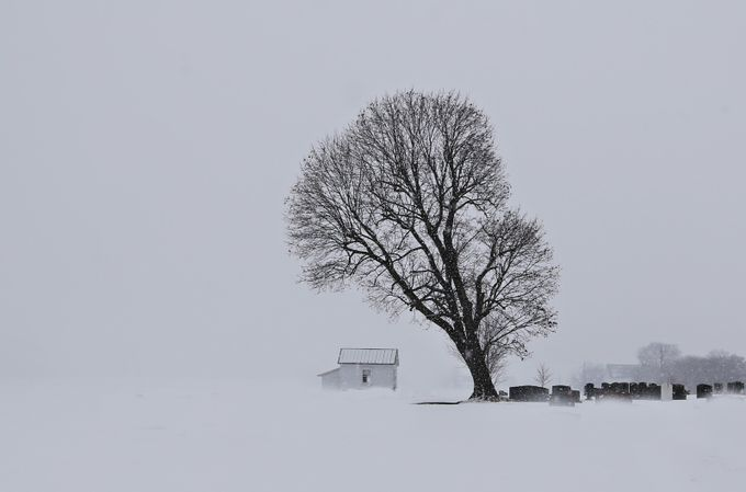 Peaceful contrast by bethadkinsberry - Composing with Negative Space Photo Contest