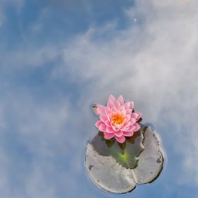 Sky reflecting from the surface of a pond around a Peter Slocum water lily. --- Dancing Flowers: 14262 / 14382 Clash Of The Lites: 87 / 452882 Co...