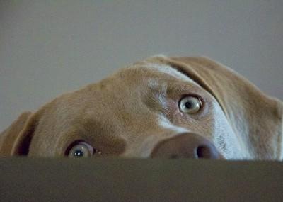 Dax eyes