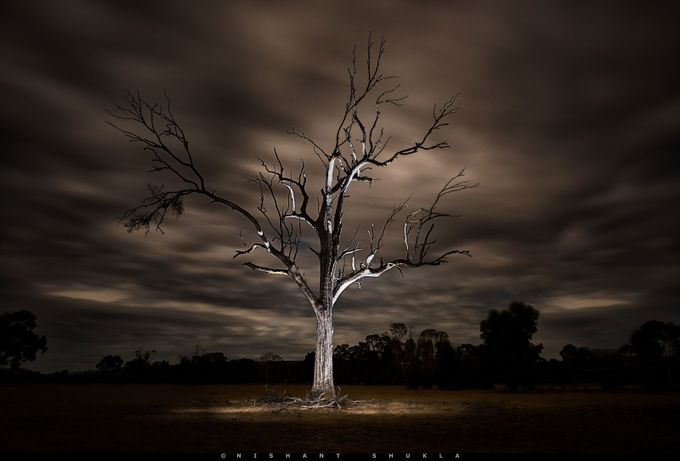 The Tree by Nishant-101 - A Lonely Tree Photo Contest