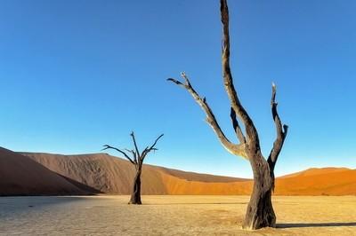 Two Namibia Desert Trees