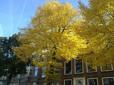 A tree in autumn dress