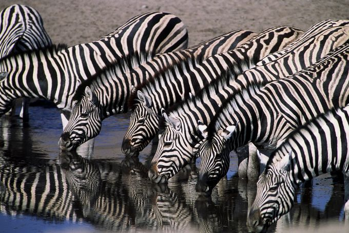 Zebra Line by srcarpen - Lakes And Reflections Photo Contest