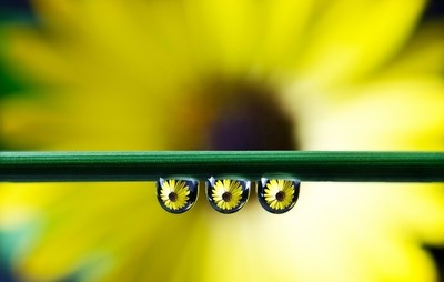 Yellow flower drops...