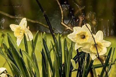 Spring-Flowers-1  Spring has Sprung !!