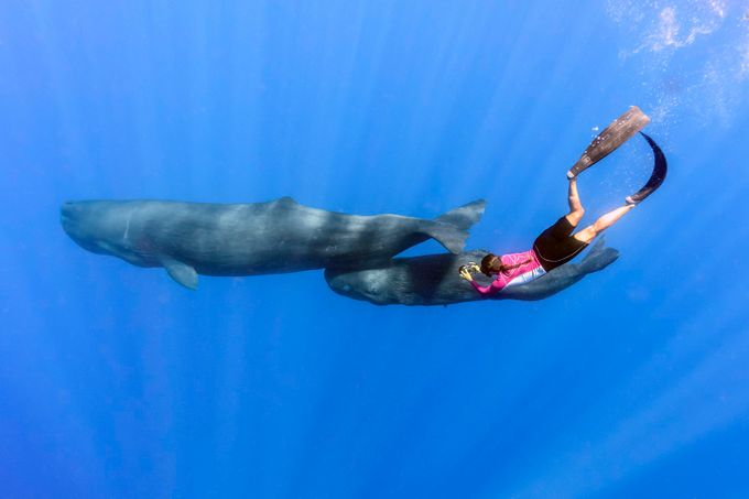 Photographing sperm whales by peterallinson - People And Water Photo Contest 2017