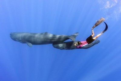 Photographing sperm whales