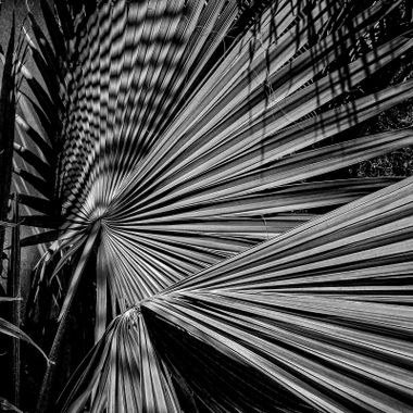 Light plays across palm leaves making an interesting pattern