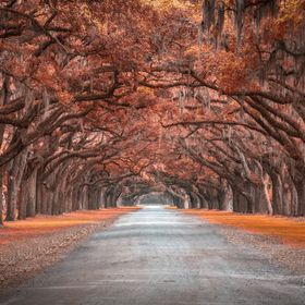 Wormsloe Historic District, Savannah, GA