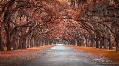 Wormsloe Historic District, Savannah, GA
