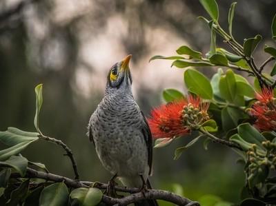 Bird Noisy Minor