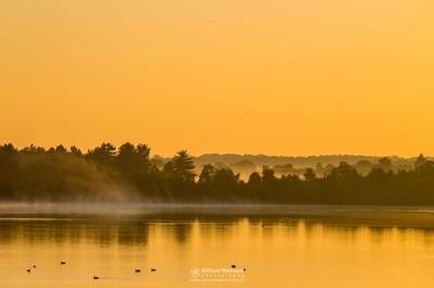 Misty Golden Sunrise