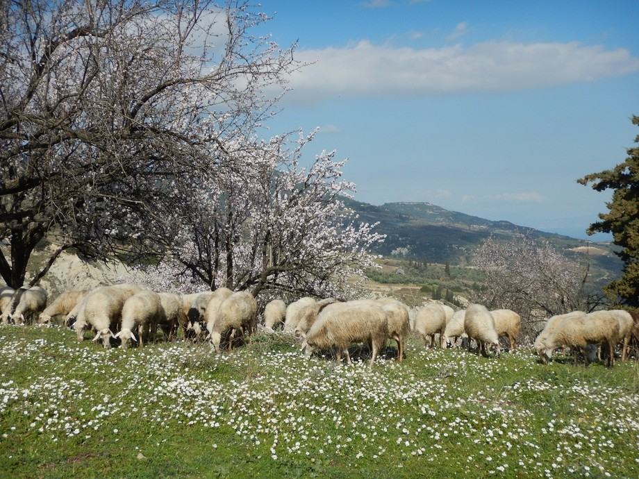 Taken on a visit to Northern Greece