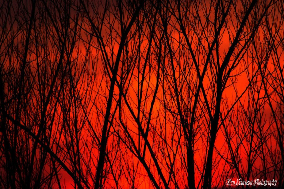 I was walking down a trail . The sky was so red. So I hid in the trees!! LOL