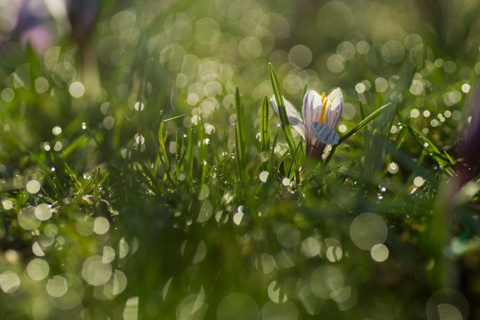 flower and bokeh by aleoko - Depth In Nature Photo Contest