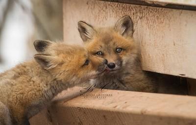 Kissing Kits
